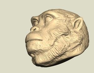 猿の顔.jpg