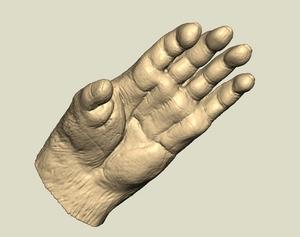 猿の手.jpg