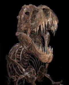 s-T rex.jpg